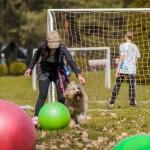 Australian Labradoodle weekend