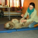 Massage training