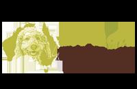 Australische Labradoodle
